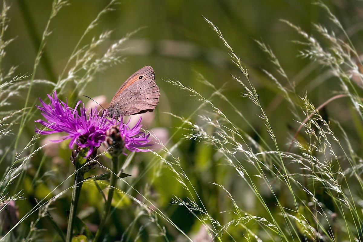 clare-gilsenan-butterfly
