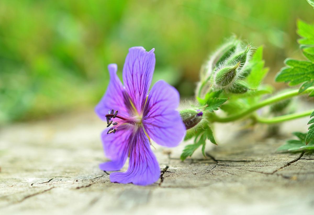 clare-gilsenan-contact-flower